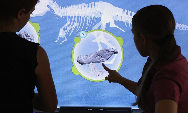 Multi-touch interactive experience with Sue the T-Rex puzzle